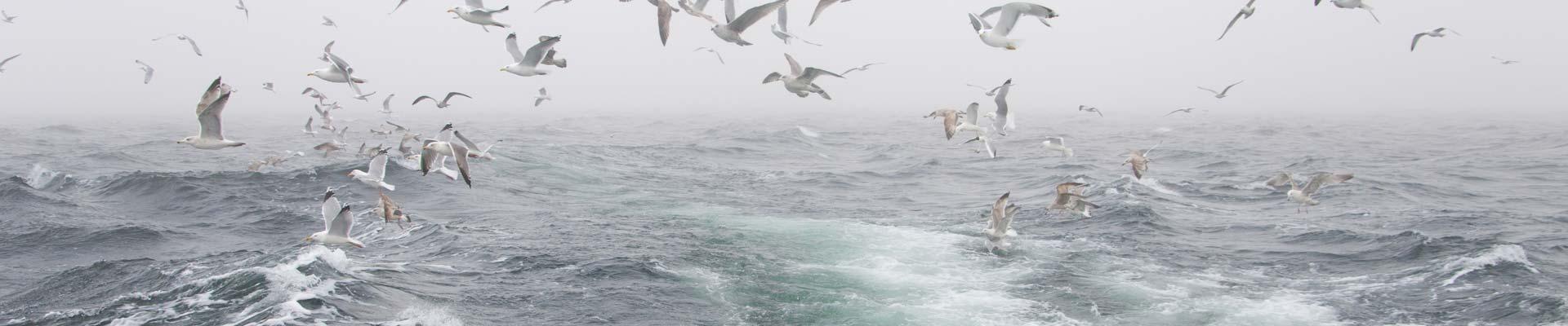 Blog hy line cruises for Cape cod deep sea fishing